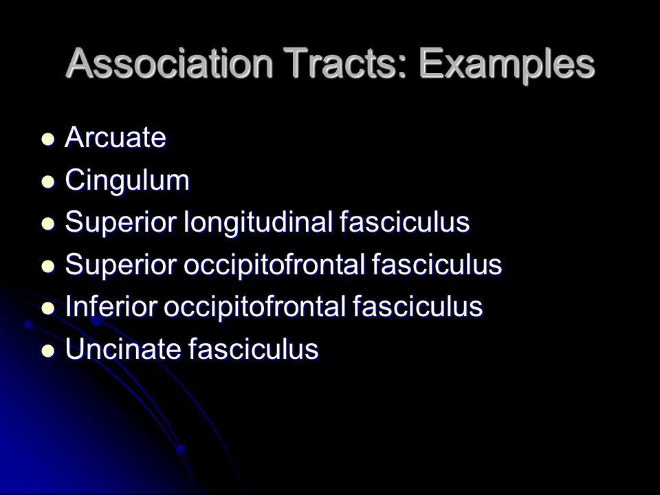 Association Tracts: Examples Arcuate Arcuate Cingulum Cingulum Superior longitudinal fasciculus Superior longitudinal fasciculus Superior occipitofron