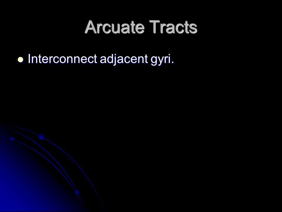 Arcuate Tracts Interconnect adjacent gyri. Interconnect adjacent gyri.