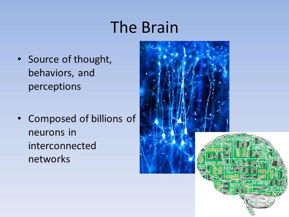 The Brain Source of thought, behaviors, and perceptions Composed of billions of neurons in interconnected networks