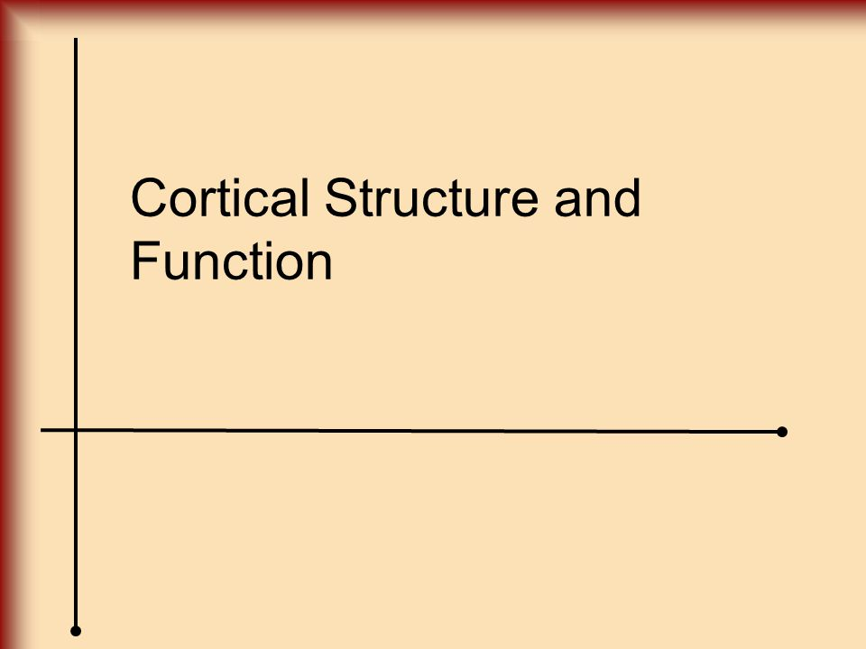 Cortical Structure and Function