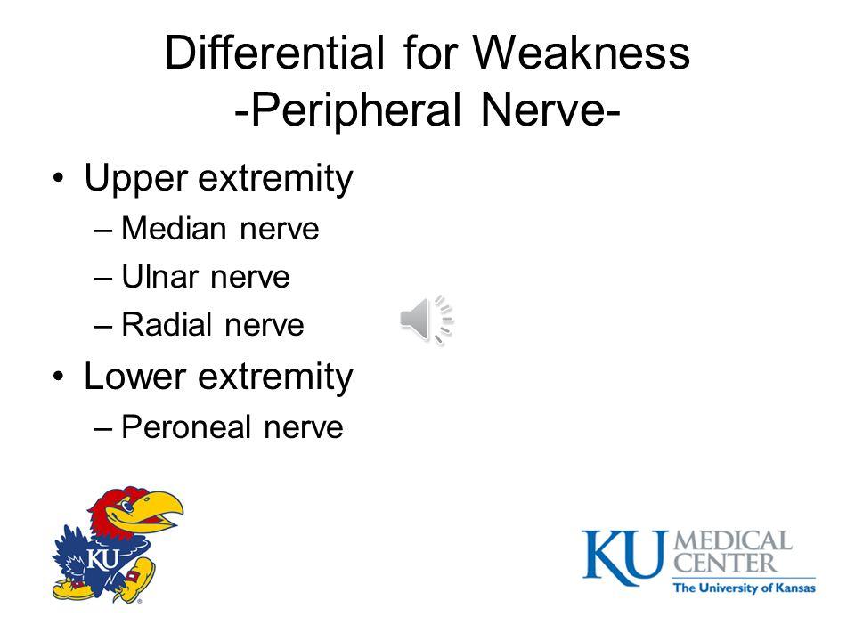 Differential for Weakness -Plexus- Lumbosacral plexus http://upload.wikimedia.org/wikipedia/commo ns/thumb/7/73/Lumbar_plexus.svg/250px- Lumbar_plexus.svg.png
