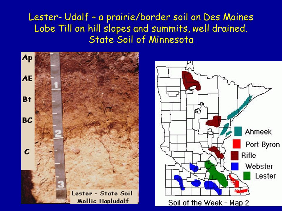 Lester- Udalf – a prairie/border soil on Des Moines Lobe Till on hill slopes and summits, well drained. State Soil of Minnesota