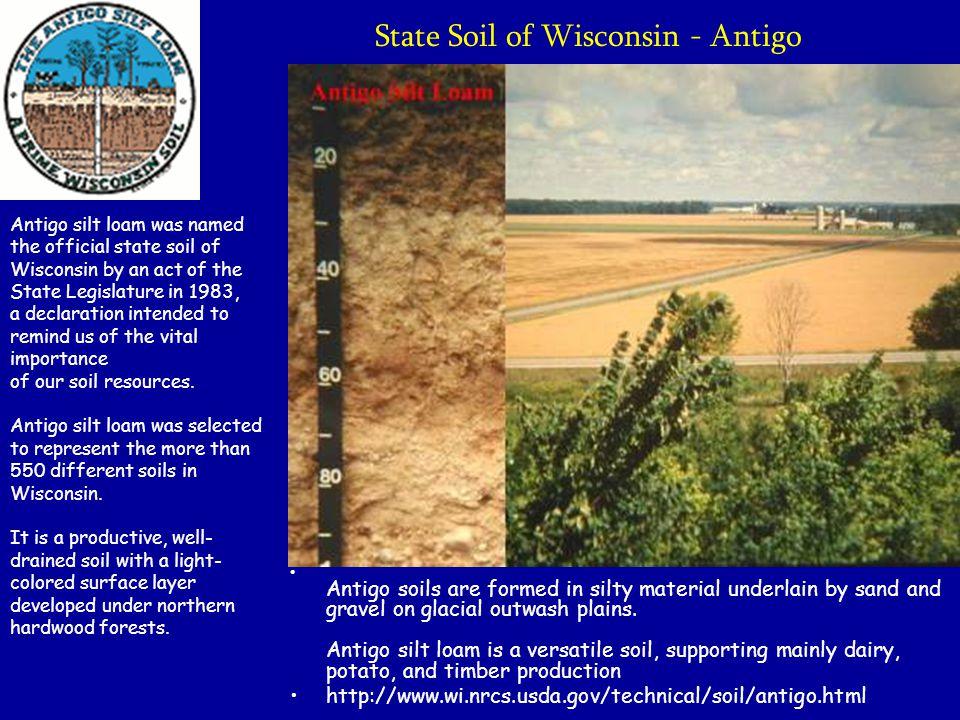 State Soil of Wisconsin - Antigo Antigo soils are formed in silty material underlain by sand and gravel on glacial outwash plains. Antigo silt loam is