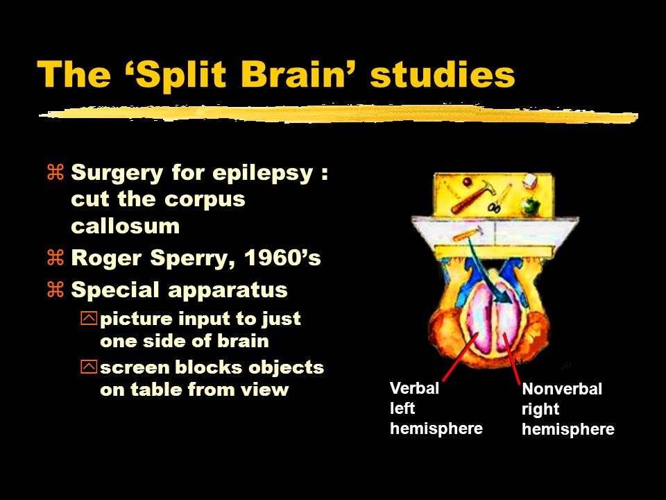 The 'Split Brain' studies zSurgery for epilepsy : cut the corpus callosum zRoger Sperry, 1960's zSpecial apparatus ypicture input to just one side of brain yscreen blocks objects on table from view Nonverbal right hemisphere Verbal left hemisphere