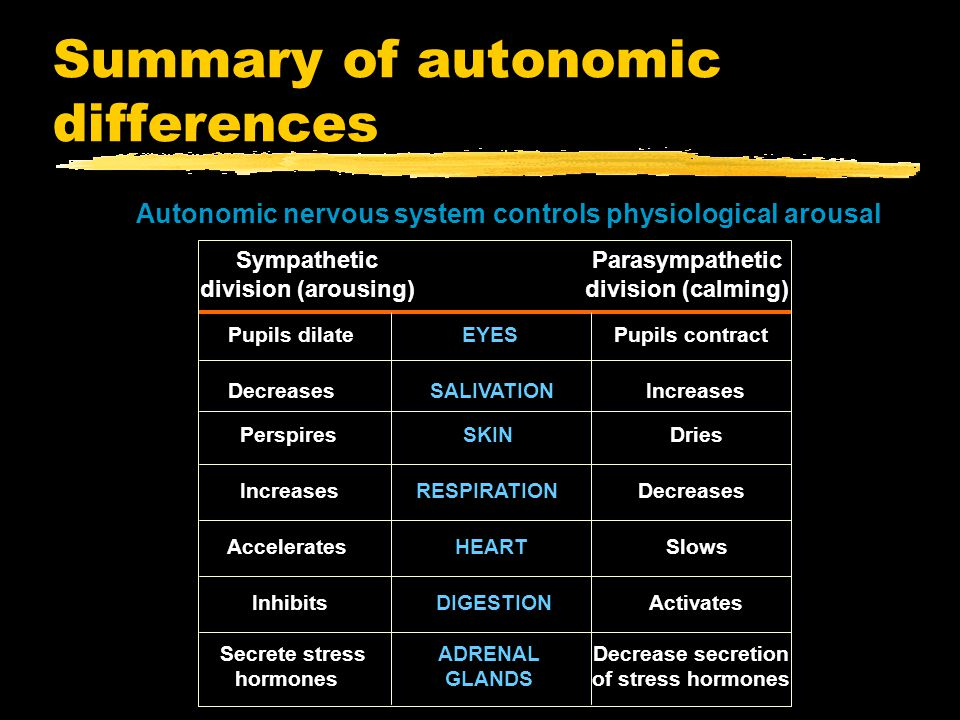 Summary of autonomic differences Autonomic nervous system controls physiological arousal Sympathetic division (arousing) Parasympathetic division (calming) Pupils dilate EYES Pupils contract Decreases SALIVATION Increases Perspires SKIN Dries Increases RESPIRATION Decreases Accelerates HEART Slows Inhibits DIGESTION Activates Secrete stress hormones ADRENAL GLANDS Decrease secretion of stress hormones