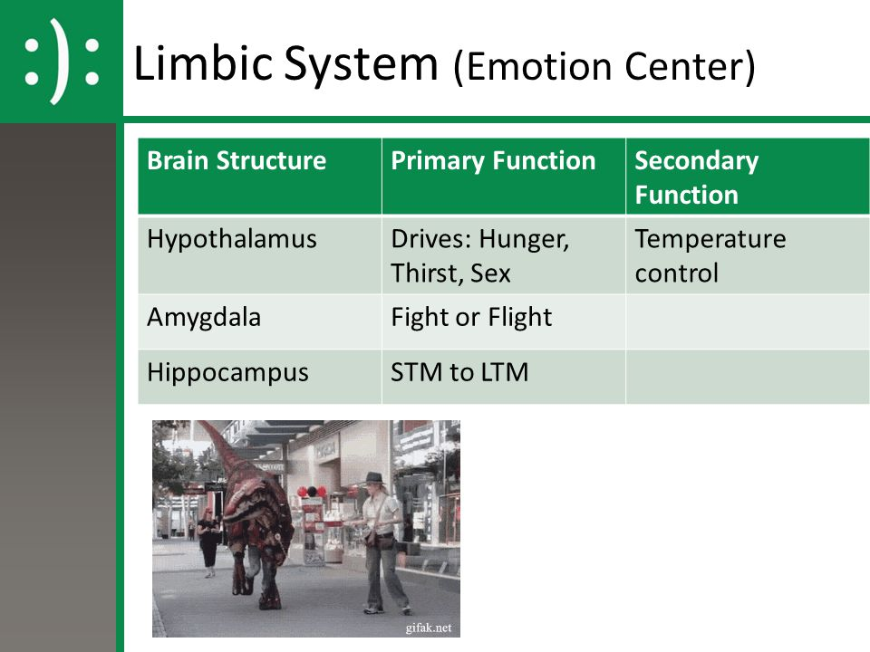 Limbic System (Emotion Center) Brain StructurePrimary FunctionSecondary Function HypothalamusDrives: Hunger, Thirst, Sex Temperature control AmygdalaF