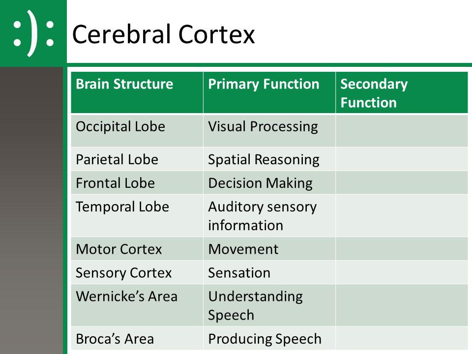 Cerebral Cortex Brain StructurePrimary FunctionSecondary Function Occipital LobeVisual Processing Parietal LobeSpatial Reasoning Frontal LobeDecision