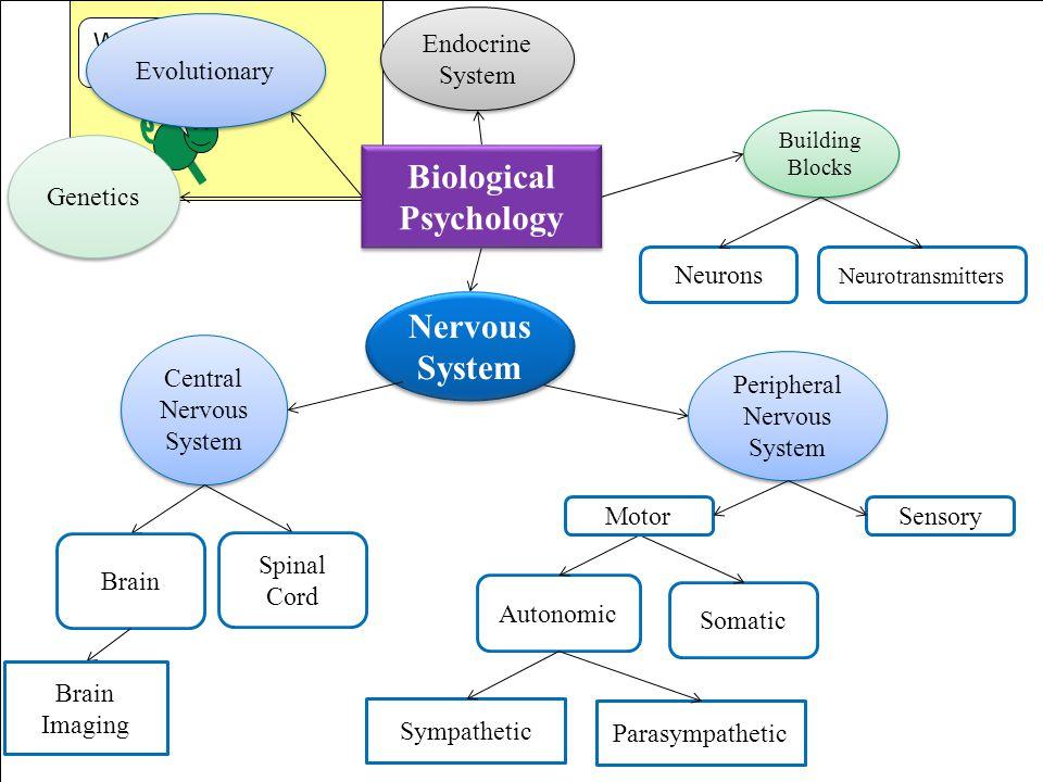 We are here Nervous System Central Nervous System Brain Brain Imaging Peripheral Nervous System Building Blocks Genetics Evolutionary Endocrine System