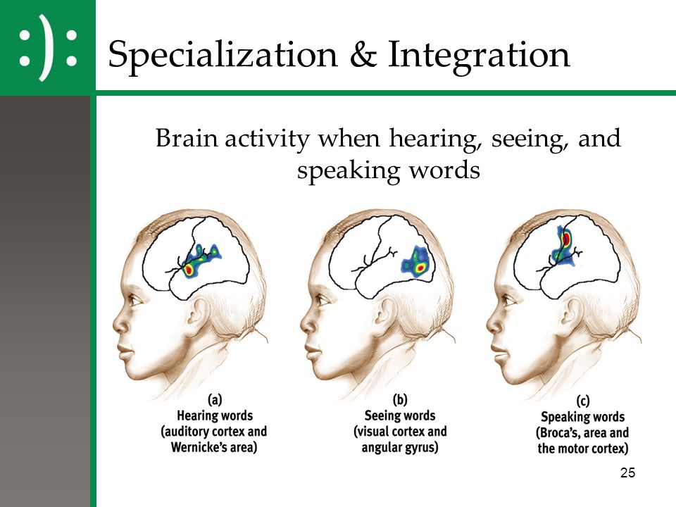 25 Specialization & Integration Brain activity when hearing, seeing, and speaking words