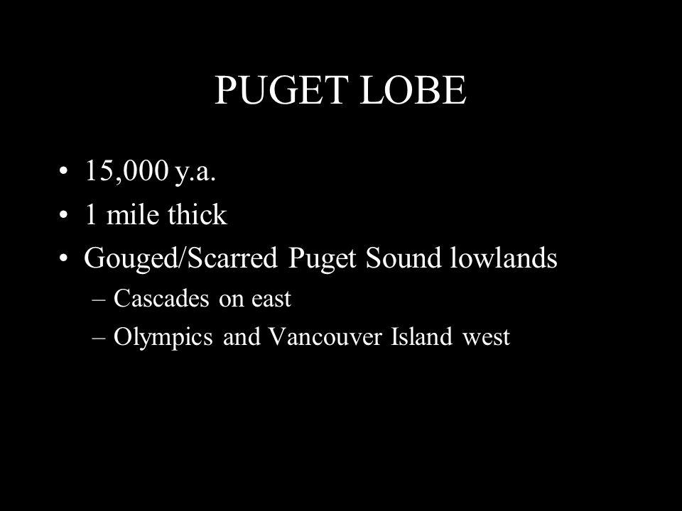 PUGET LOBE 15,000 y.a.