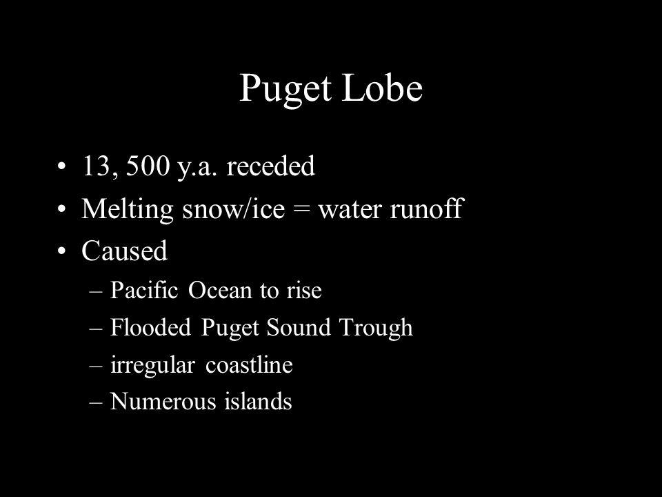 Puget Lobe 13, 500 y.a.