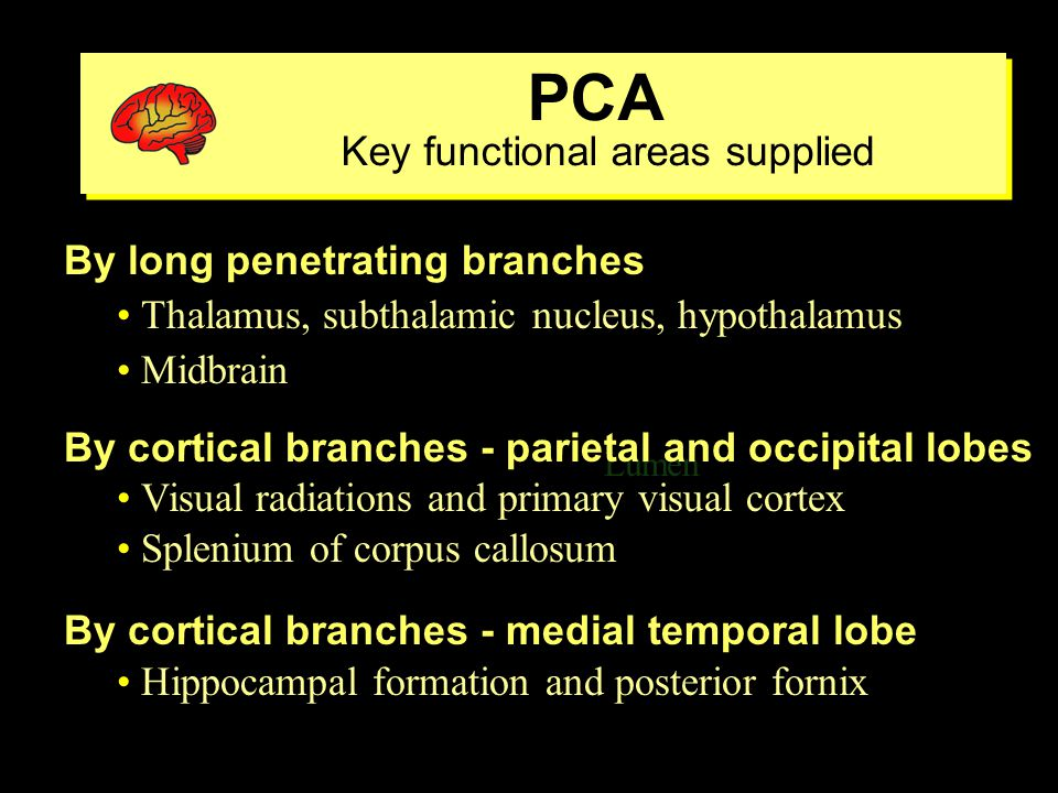 Common Anastomoses Collateral circulation may prevent ischemia Common Anastomoses Collateral circulation may prevent ischemia Lumen ventricle External-internal carotid via ophthalmic branches Circle of Willis Muscular branches of cervical arteries-vertebral or external carotid arteries Short cortical branches of ACA, MCA, PCA Branches of the major cerebellar arteries