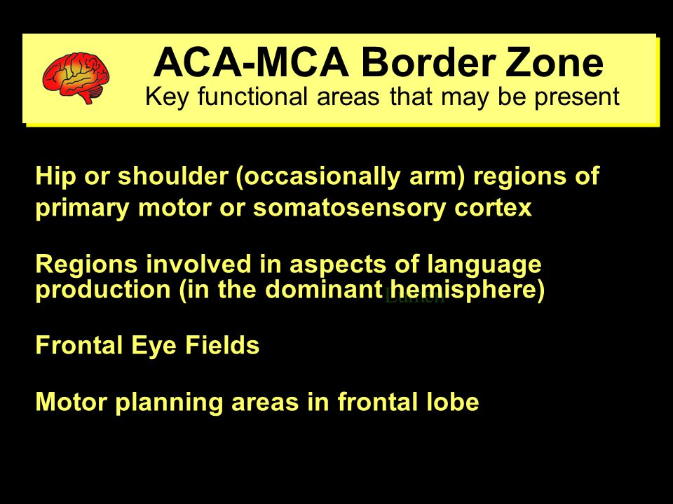 ACA/MCA-PCA Border Zone Key functional areas that may be present ACA/MCA-PCA Border Zone Key functional areas that may be present Lumen ventricle Visual radiations Foveal representation in the primary visual cortex Inferior temporal lobe cortex for visual recognition Regions for language comprehension and word finding (possibly reading) in dominant hemisphere Regions important for visuospatial perceptions in parietal lobe of nondominant hemisphere