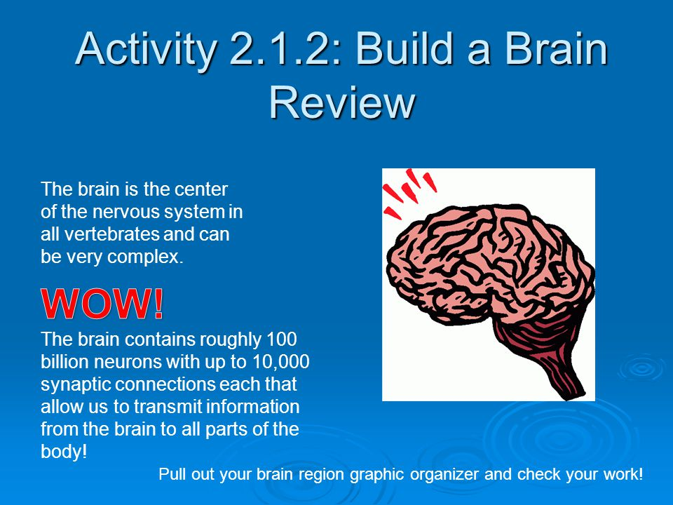Activity 2.1.2: Build a Brain Review The brain is the center of the nervous system in all vertebrates and can be very complex. Pull out your brain reg