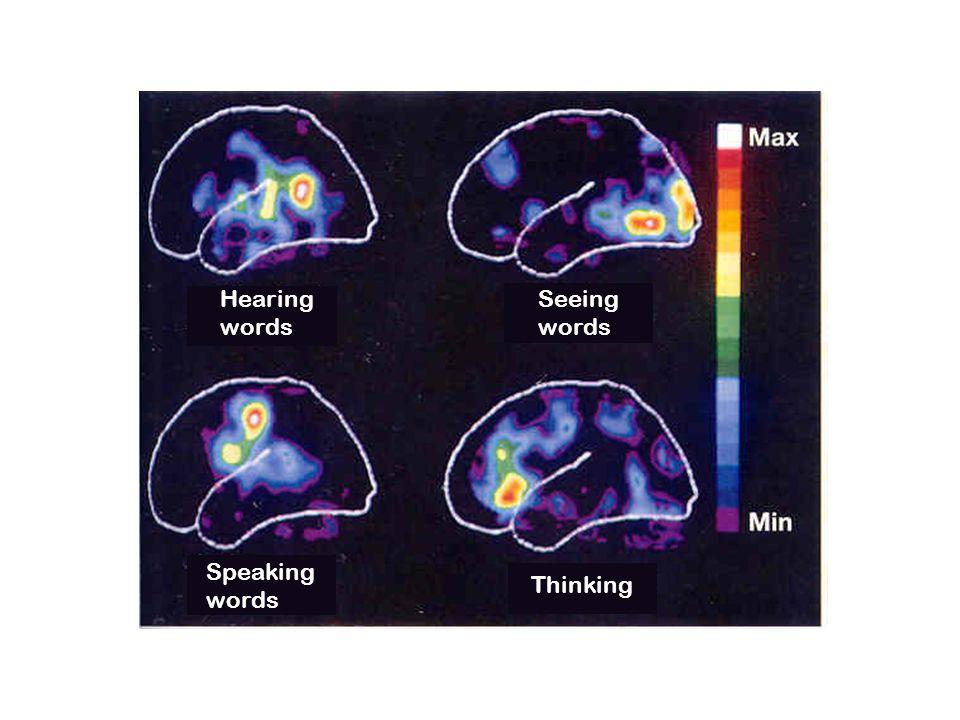 Thinking Hearing words Seeing words Speaking words