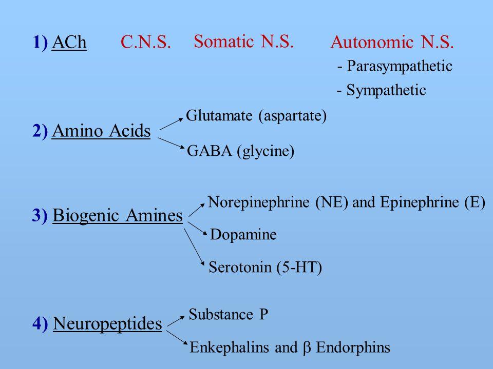 2) Amino Acids Autonomic N.S. - Parasympathetic - Sympathetic Somatic N.S.