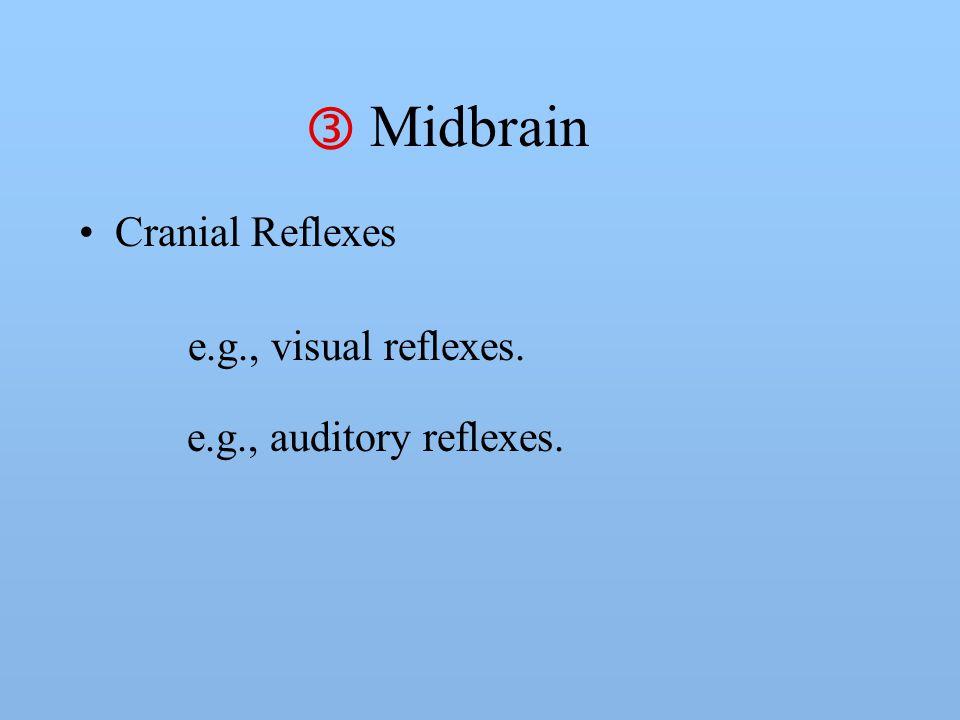Midbrain Cranial Reflexes e.g., visual reflexes.  e.g., auditory reflexes.