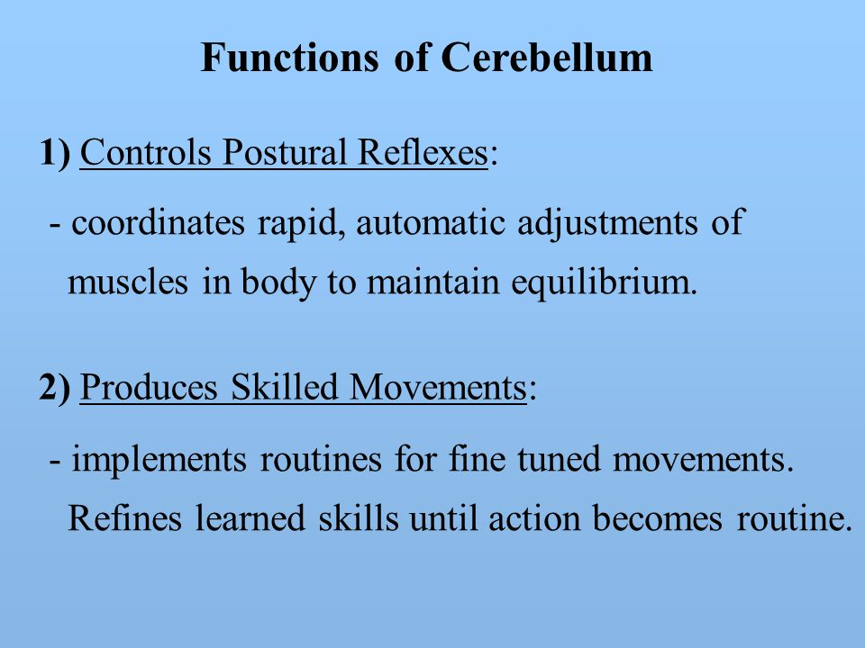 Functions of Cerebellum 1) Controls Postural Reflexes: 2) Produces Skilled Movements: - coordinates rapid, automatic adjustments of muscles in body to