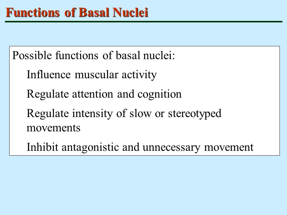 Functions of Basal Nuclei Possible functions of basal nuclei: Influence muscular activity Regulate attention and cognition Regulate intensity of slow