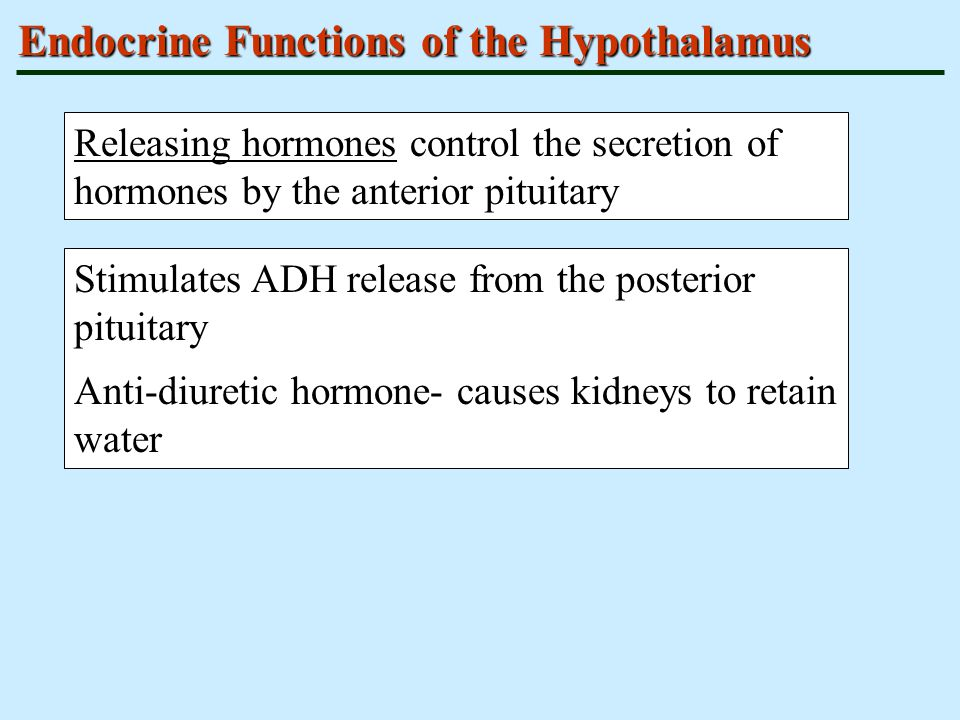 Endocrine Functions of the Hypothalamus Releasing hormones control the secretion of hormones by the anterior pituitary Stimulates ADH release from the