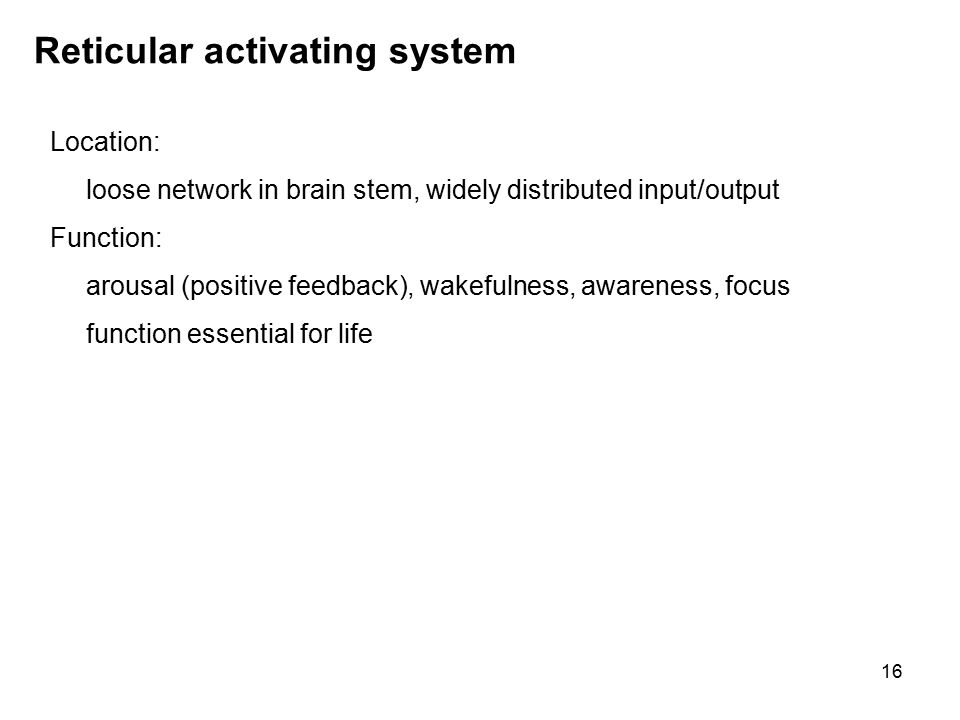 16 Reticular activating system Location: loose network in brain stem, widely distributed input/output Function: arousal (positive feedback), wakefulness, awareness, focus function essential for life