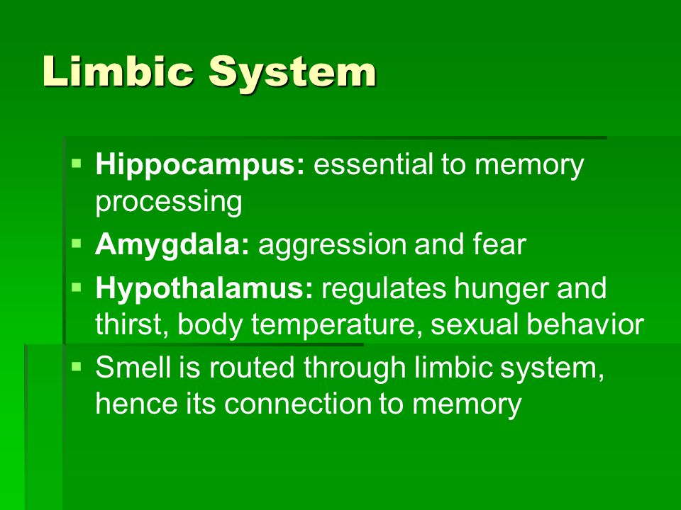 Limbic System   Hippocampus: essential to memory processing   Amygdala: aggression and fear   Hypothalamus: regulates hunger and thirst, body te