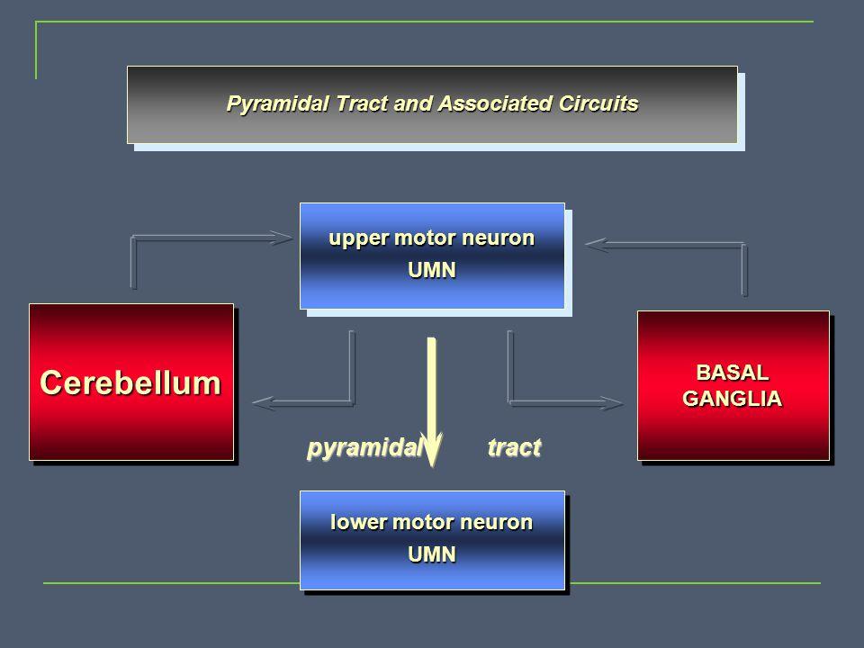 upper motor neuron UMN UMN BASALGANGLIABASALGANGLIA Pyramidal Tract and Associated Circuits lower motor neuron UMN UMN pyramidal tract CerebellumCereb