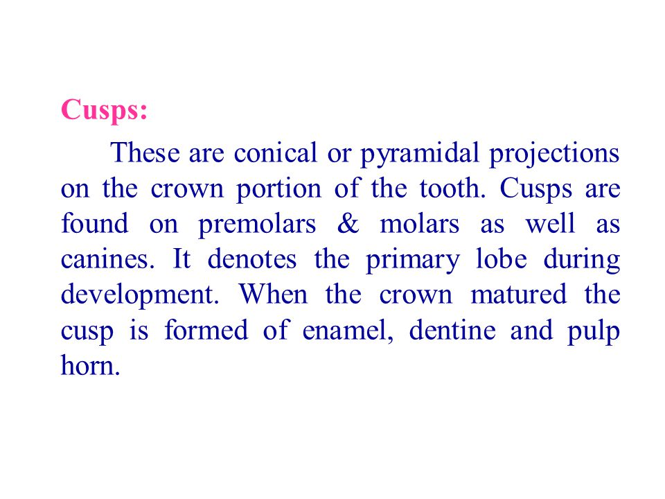 Cusps: These are conical or pyramidal projections on the crown portion of the tooth. Cusps are found on premolars & molars as well as canines. It deno