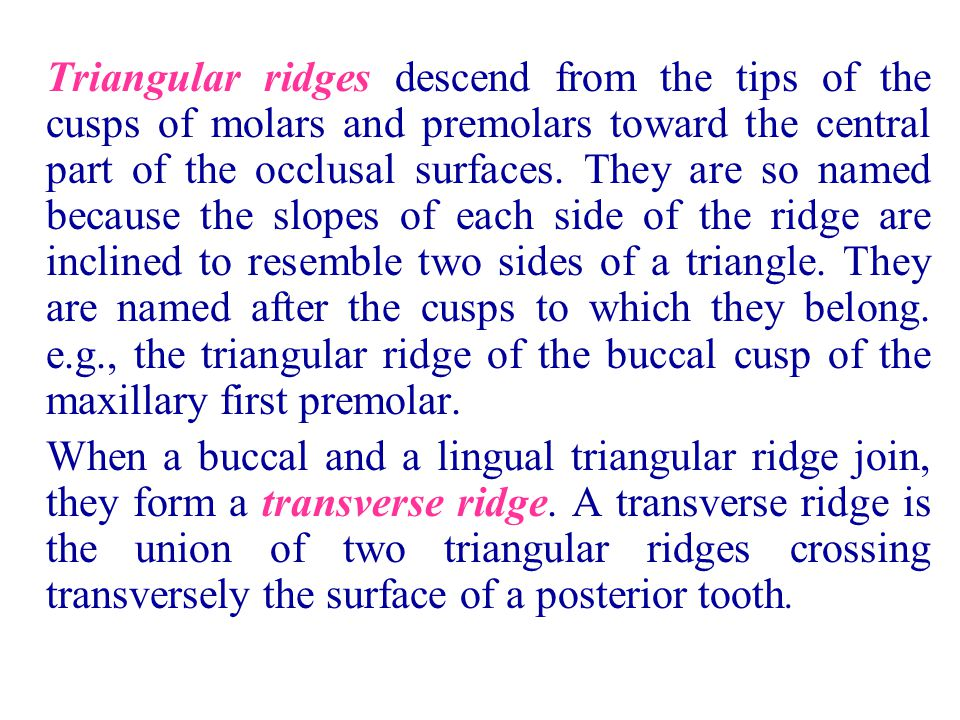 Triangular ridges descend from the tips of the cusps of molars and premolars toward the central part of the occlusal surfaces. They are so named becau