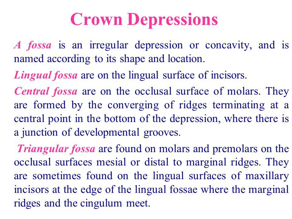 Crown Depressions A fossa is an irregular depression or concavity, and is named according to its shape and location. Lingual fossa are on the lingual