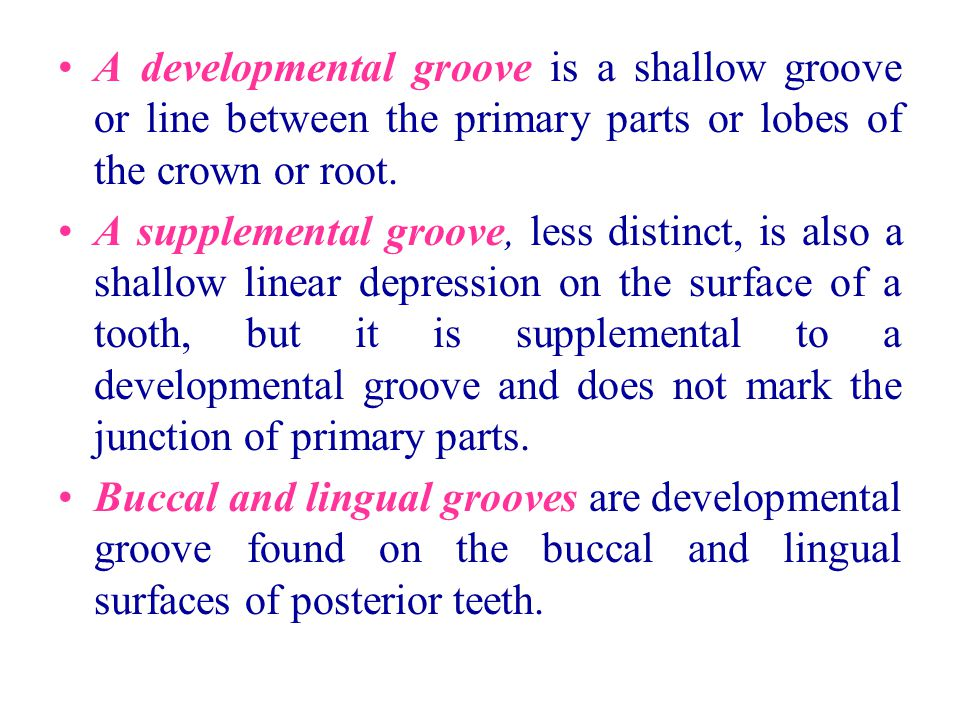 A developmental groove is a shallow groove or line between the primary parts or lobes of the crown or root. A supplemental groove, less distinct, is a