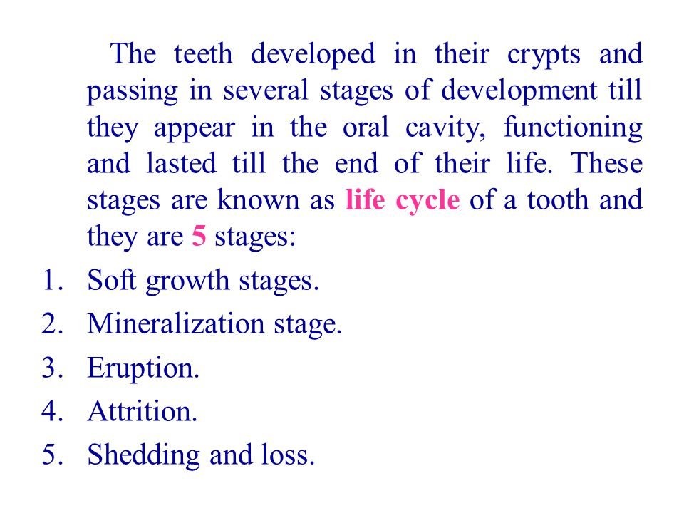 The teeth developed in their crypts and passing in several stages of development till they appear in the oral cavity, functioning and lasted till the