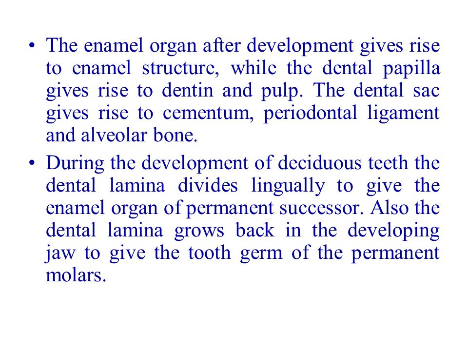 The enamel organ after development gives rise to enamel structure, while the dental papilla gives rise to dentin and pulp. The dental sac gives rise t