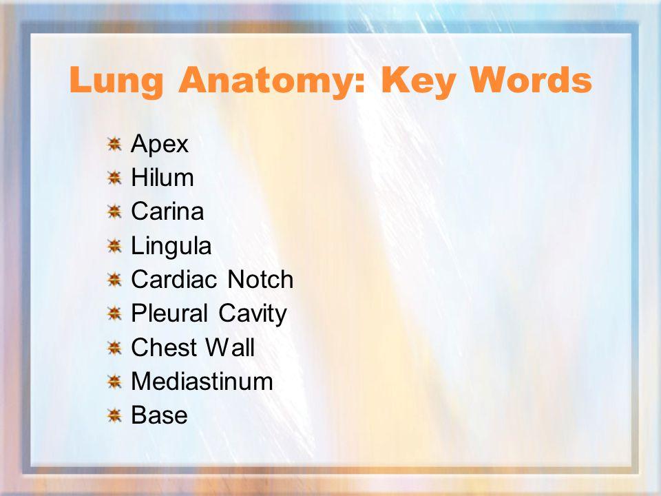 Lung Anatomy: Key Words Apex Hilum Carina Lingula Cardiac Notch Pleural Cavity Chest Wall Mediastinum Base