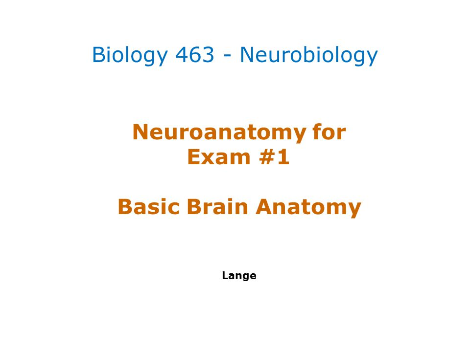 Neuroanatomy for Exam #1 Basic Brain Anatomy Lange Biology 463 - Neurobiology