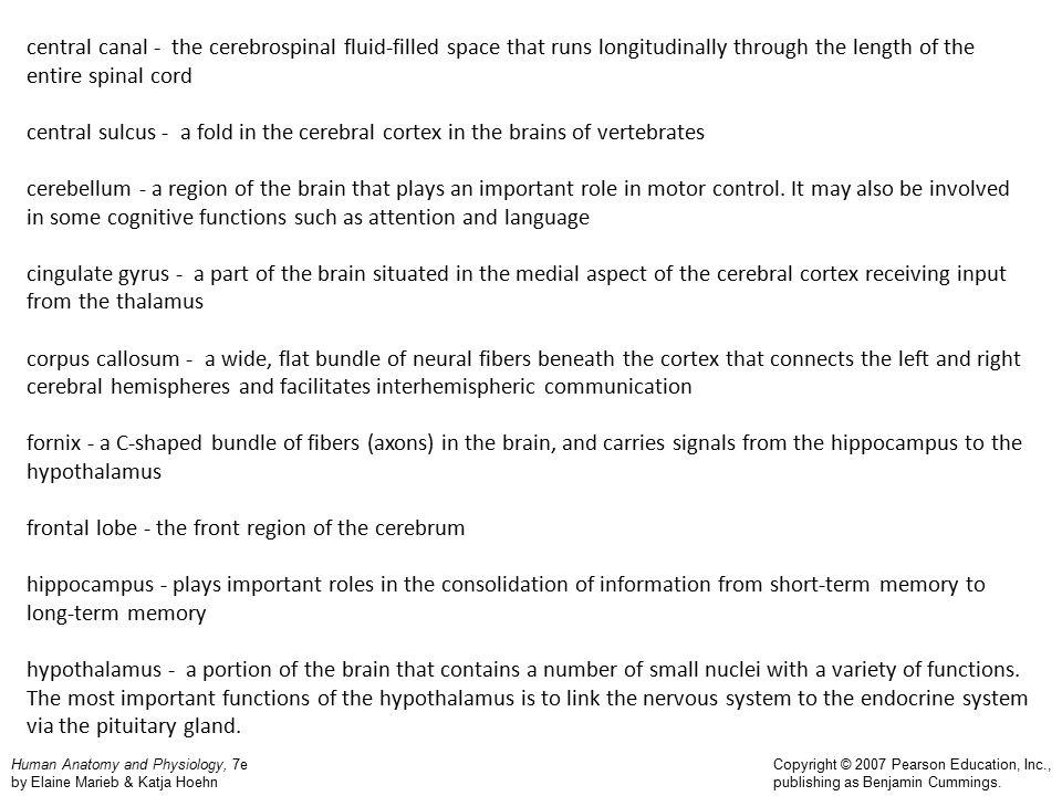 Human Anatomy and Physiology, 7e by Elaine Marieb & Katja Hoehn Copyright © 2007 Pearson Education, Inc., publishing as Benjamin Cummings.