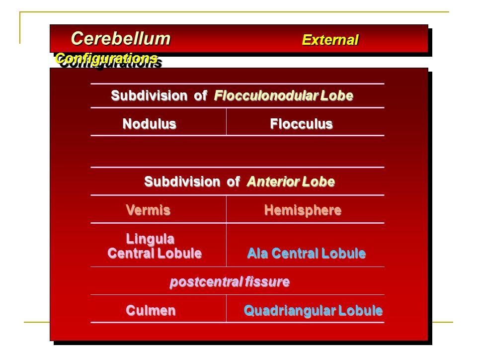 Subdivision of Flocculonodular Lobe Subdivision of Flocculonodular Lobe Nodulus Flocculus Nodulus Flocculus Subdivision of Anterior Lobe Subdivision o