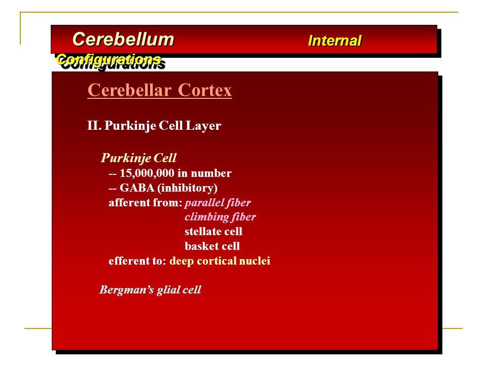 Cerebellar Cortex II. Purkinje Cell Layer Purkinje Cell -- 15,000,000 in number -- GABA (inhibitory) afferent from: parallel fiber climbing fiber stel