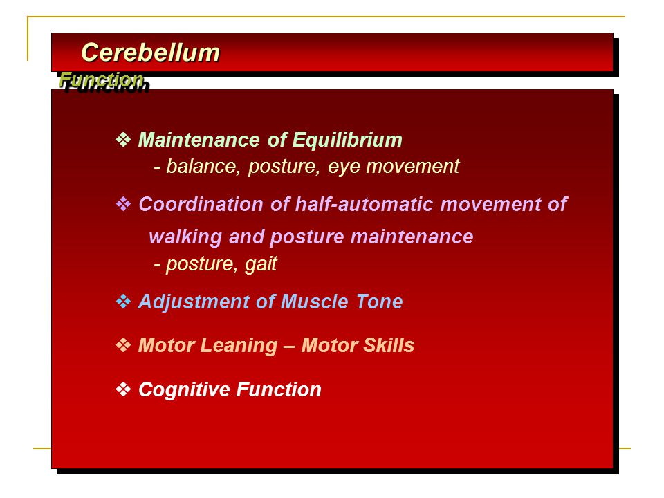 Cerebellum Function Cerebellum Function  Maintenance of Equilibrium - balance, posture, eye movement  Coordination of half-automatic movement of walking and posture maintenance - posture, gait  Adjustment of Muscle Tone  Motor Leaning – Motor Skills  Cognitive Function