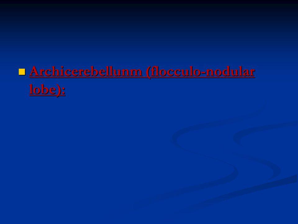 Archicerebellunm (flocculo-nodular lobe): Archicerebellunm (flocculo-nodular lobe):