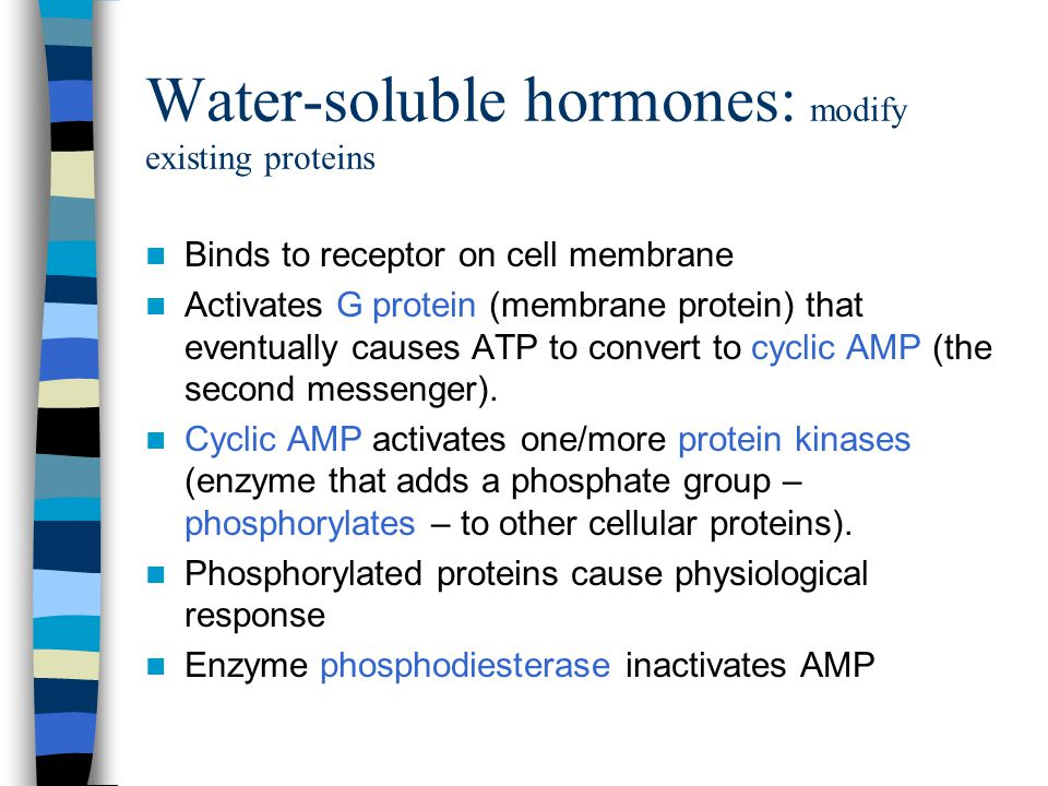 Water-soluble hormones: modify existing proteins Binds to receptor on cell membrane Activates G protein (membrane protein) that eventually causes ATP