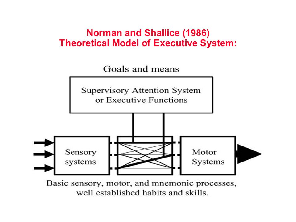 Norman and Shallice (1986) Theoretical Model of Executive System: