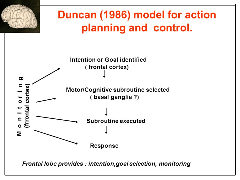 Duncan (1986) model for action planning and control.