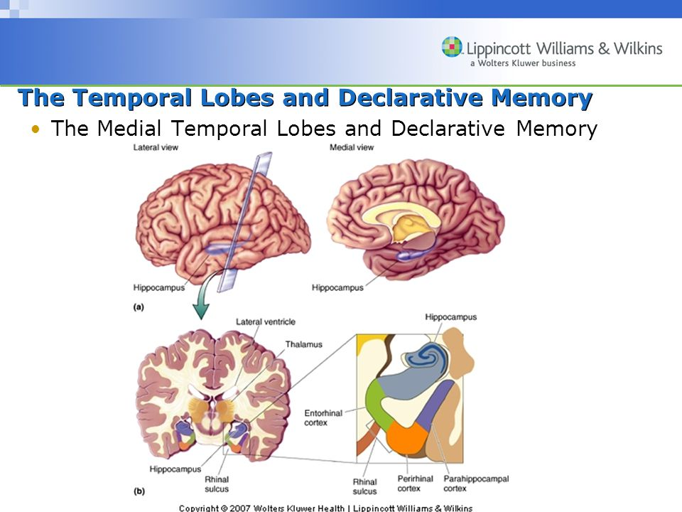 Copyright © 2007 Wolters Kluwer Health | Lippincott Williams & Wilkins The Temporal Lobes and Declarative Memory The Medial Temporal Lobes and Declarative Memory