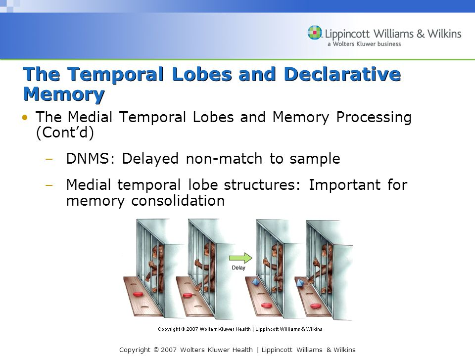 Copyright © 2007 Wolters Kluwer Health   Lippincott Williams & Wilkins The Temporal Lobes and Declarative Memory The Medial Temporal Lobes and Memory Processing (Cont'd) –DNMS: Delayed non-match to sample –Medial temporal lobe structures: Important for memory consolidation