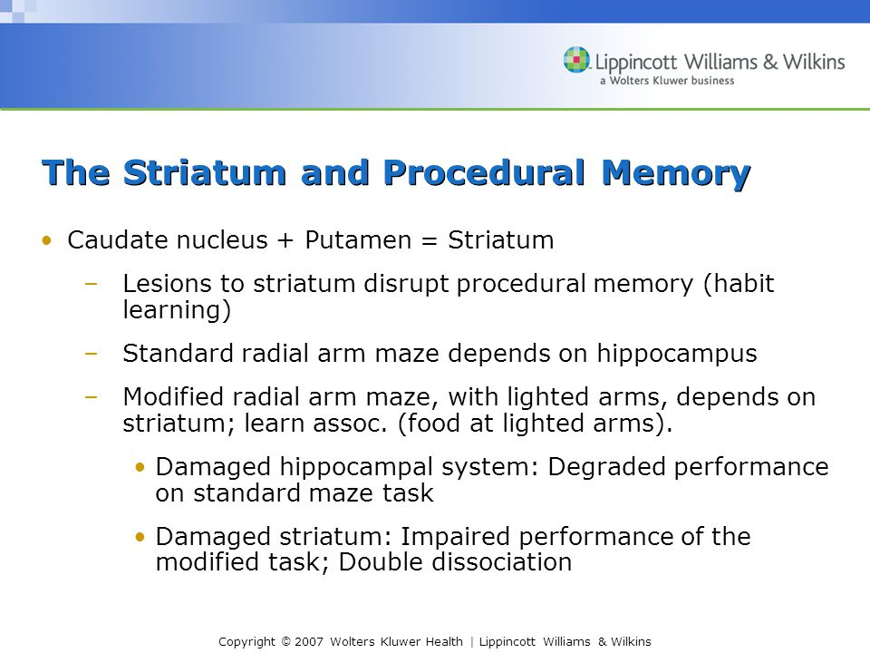 Copyright © 2007 Wolters Kluwer Health | Lippincott Williams & Wilkins The Striatum and Procedural Memory Caudate nucleus + Putamen = Striatum –Lesions to striatum disrupt procedural memory (habit learning) –Standard radial arm maze depends on hippocampus –Modified radial arm maze, with lighted arms, depends on striatum; learn assoc.