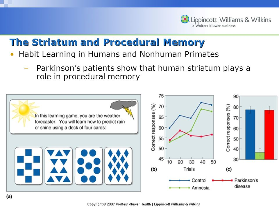 Copyright © 2007 Wolters Kluwer Health | Lippincott Williams & Wilkins The Striatum and Procedural Memory Habit Learning in Humans and Nonhuman Primates –Parkinson's patients show that human striatum plays a role in procedural memory