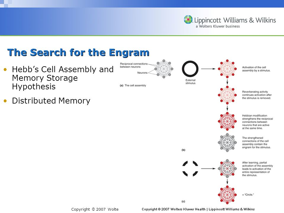 Copyright © 2007 Wolters Kluwer Health | Lippincott Williams & Wilkins The Search for the Engram Hebb's Cell Assembly and Memory Storage Hypothesis Distributed Memory