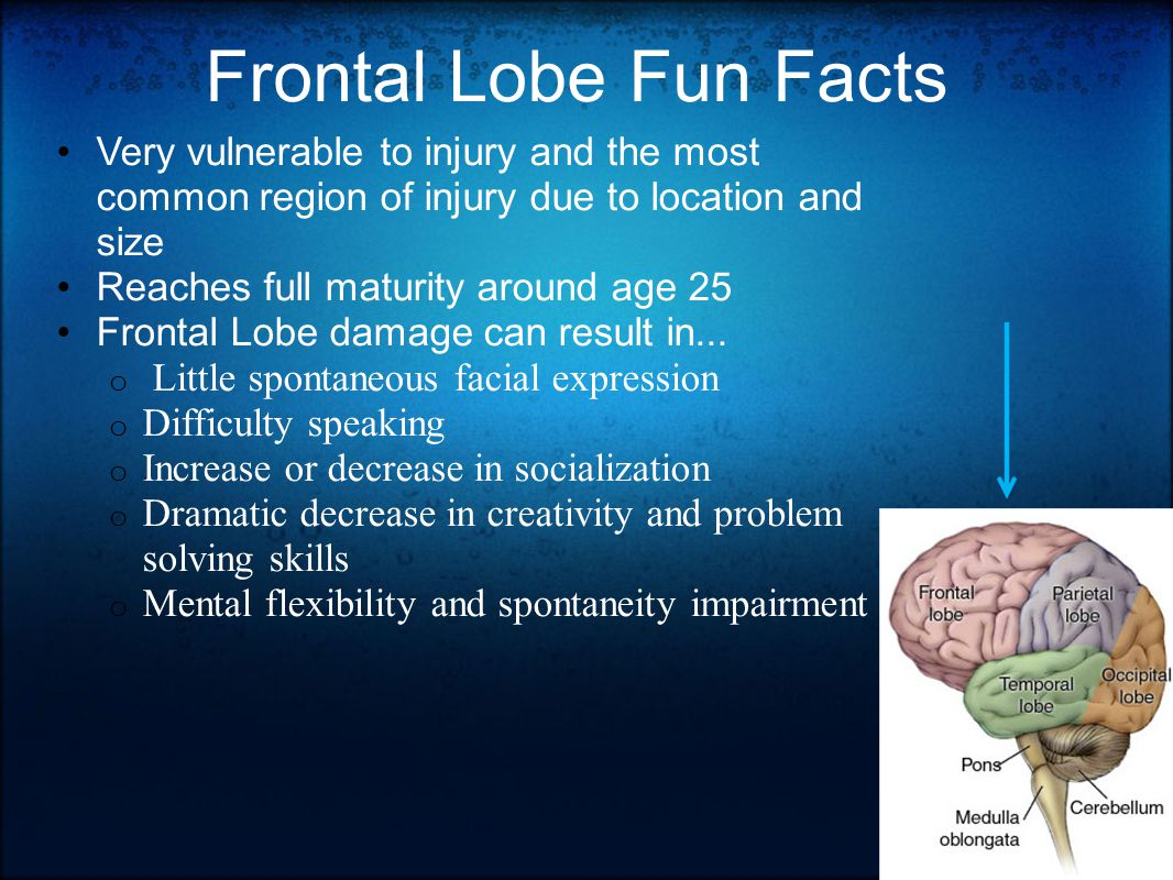 Frontal Lobe Fun Facts Very vulnerable to injury and the most common region of injury due to location and size Reaches full maturity around age 25 Frontal Lobe damage can result in...