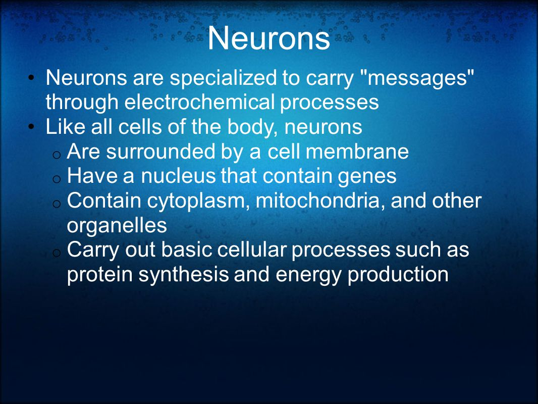 Neurons Neurons are specialized to carry messages through electrochemical processes Like all cells of the body, neurons o Are surrounded by a cell membrane o Have a nucleus that contain genes o Contain cytoplasm, mitochondria, and other organelles o Carry out basic cellular processes such as protein synthesis and energy production